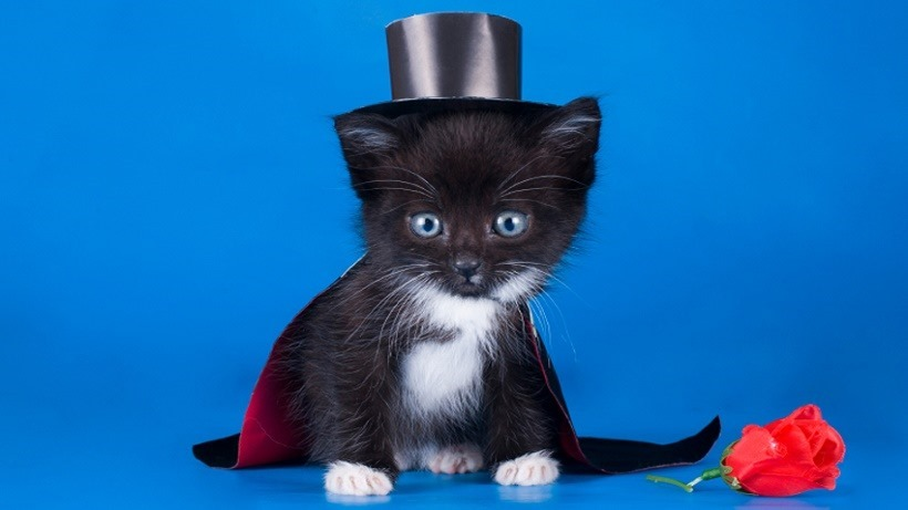 little kitten in a magician suit