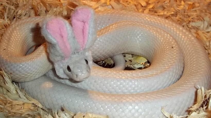 Cute snakey
