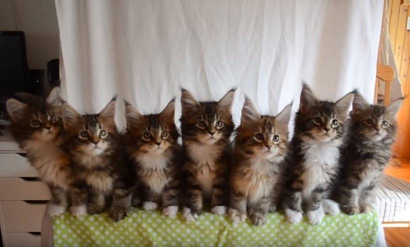 SEVEN KITTIES