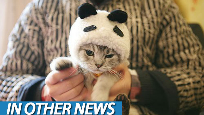 Panda cat ion
