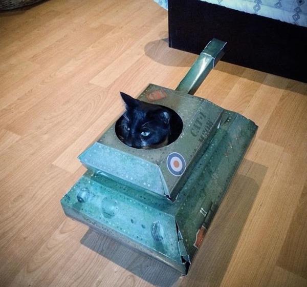 Lupin in a tank