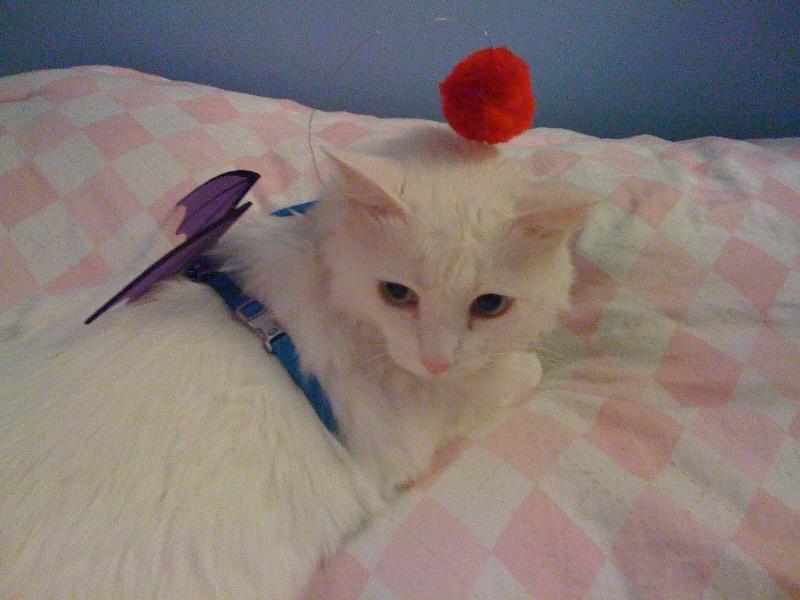 Moogle kitty