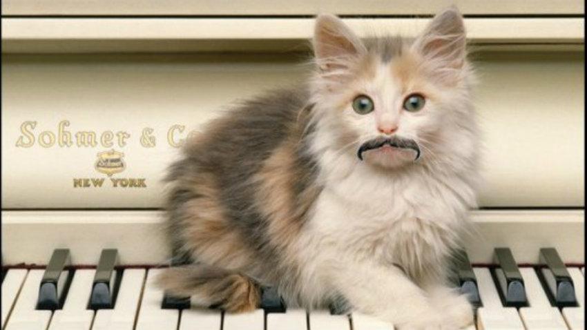 Kitty moustache