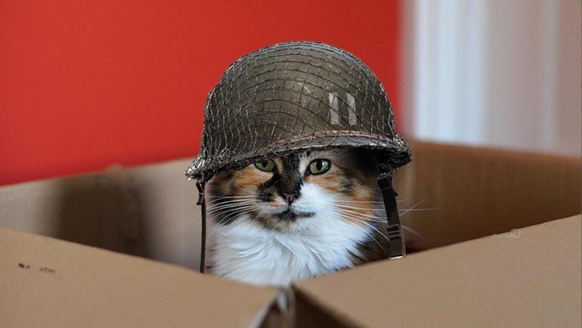 Loot-cat
