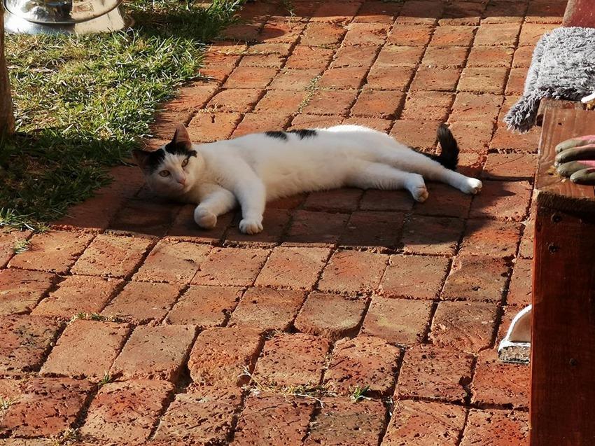 Maximum Kitty (1)