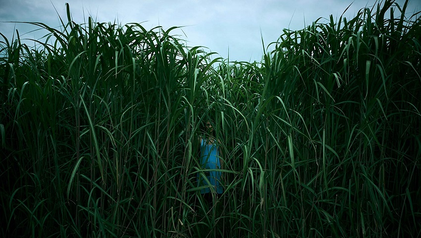 Beware the long grass in Netflix's adaption of Stephen King and Joe Hill's horror thriller In the Tall Grass